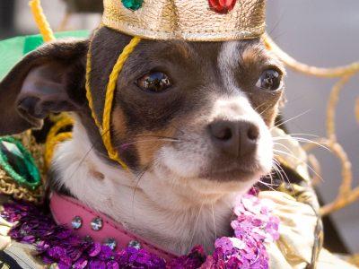 dog dressed up for Barkus parade